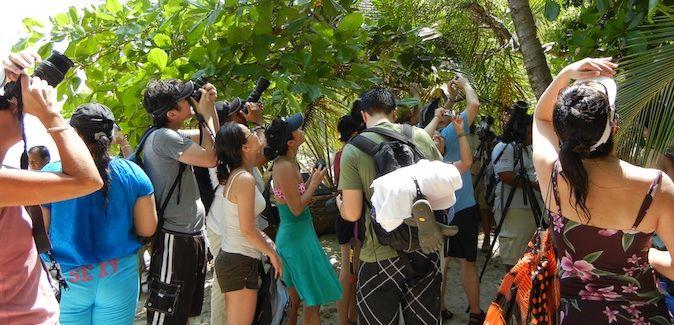 A large crowd of travelers looking at wildlife in Manuel Antonio