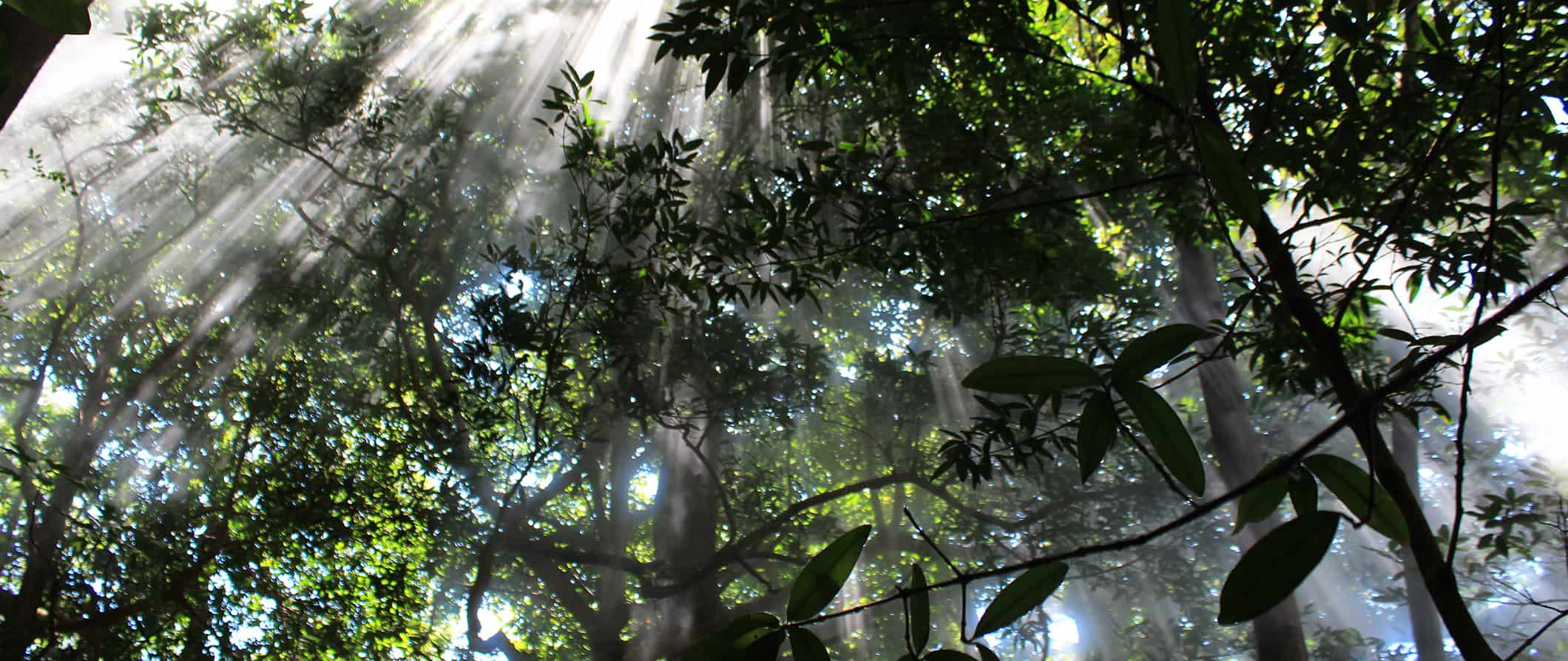 the cloud forest in monteverde, costa rica