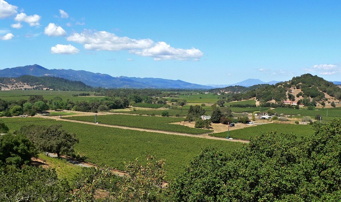 The beautiful vineyards of napa valley in the USA in the summer