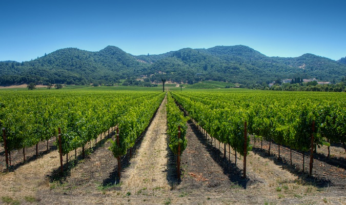 A closer look at picturesque napa valley vineyards in the USA
