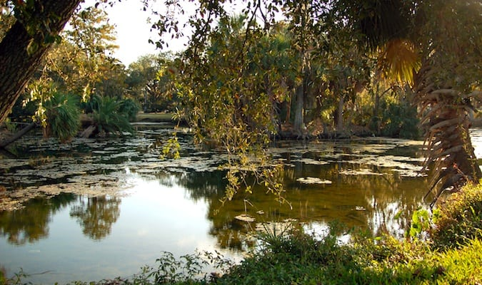 Pond in New Orleans City Park at sunset