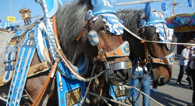 Fancy horses outside of the tents at Oktoberfest in Germany