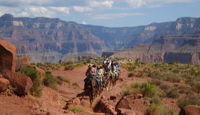 A group of horseback riders forging their way through the Grand Canyon
