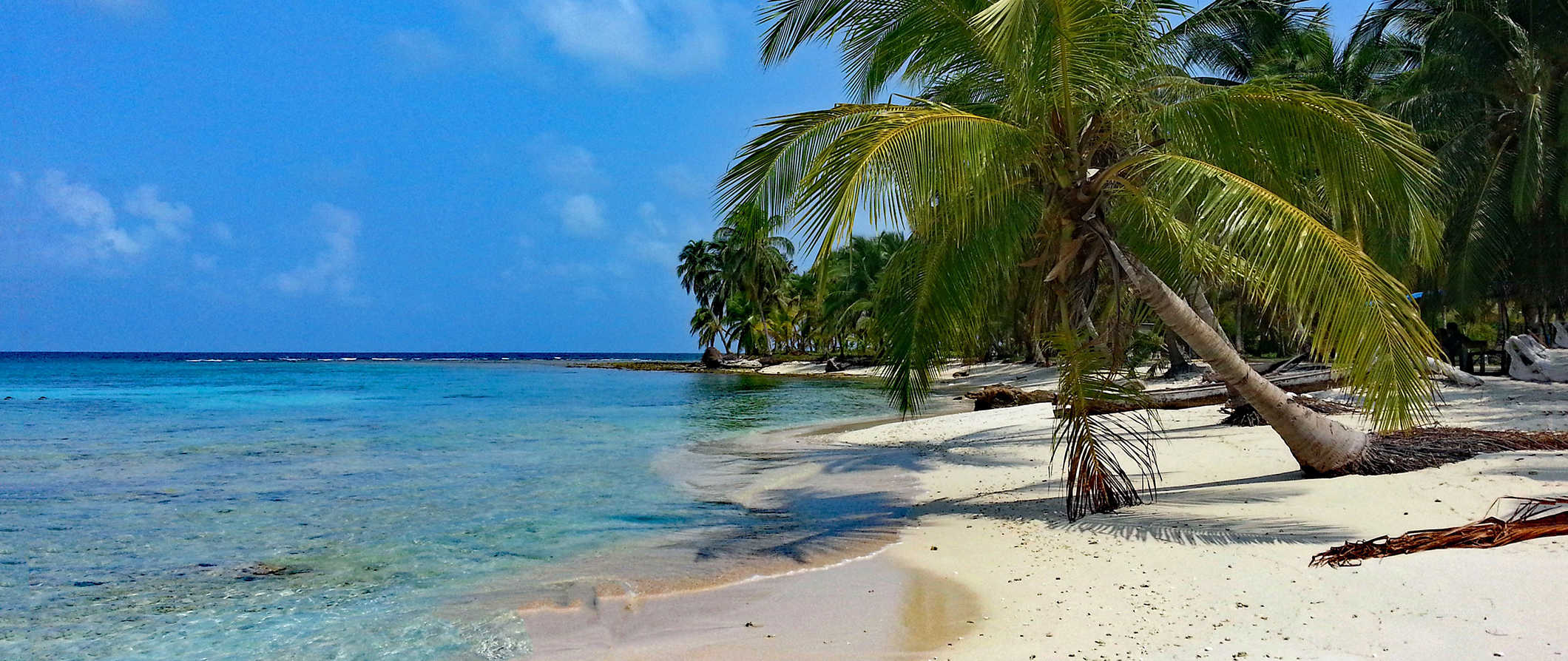 tropical palm trees and beaches in Panama
