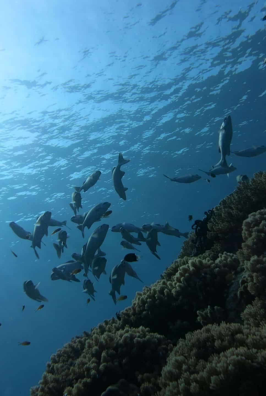 Scuba diving in the Perhentian Islands
