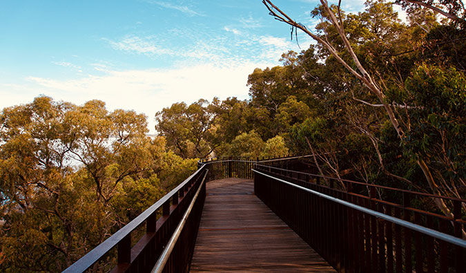 The walkway at Kings Park; Photo by Natalie Maguire (flickr: @natalietracy)