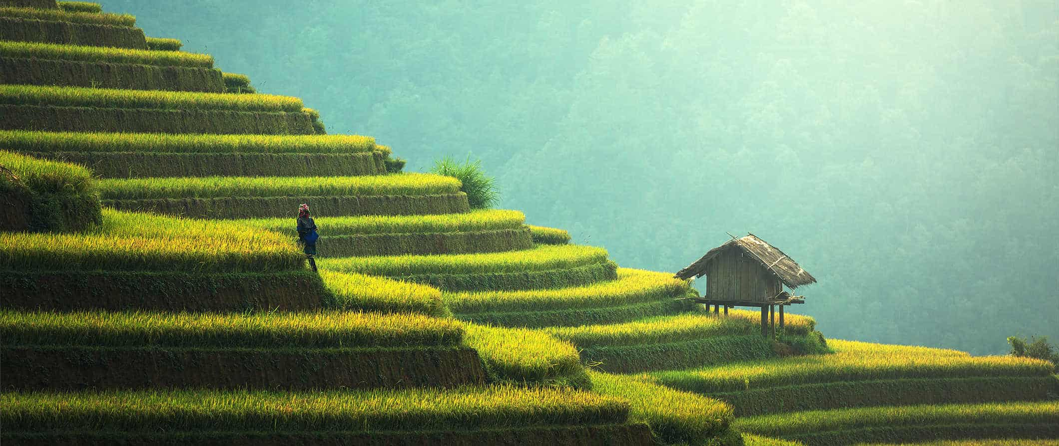 rice terraces in Southeast Asia