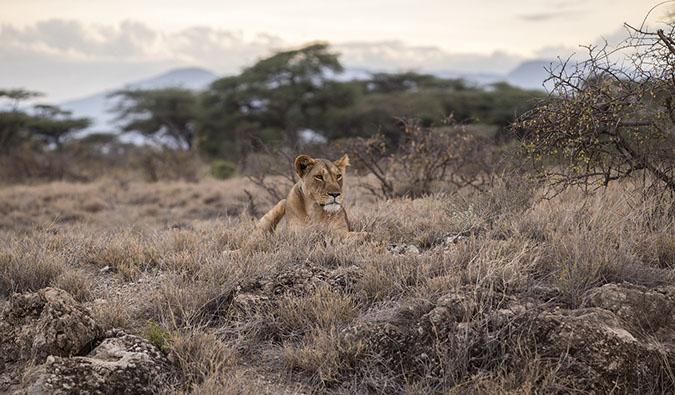 Serengeti National Park and Masai Mara National Park in Tanzania and Kenya