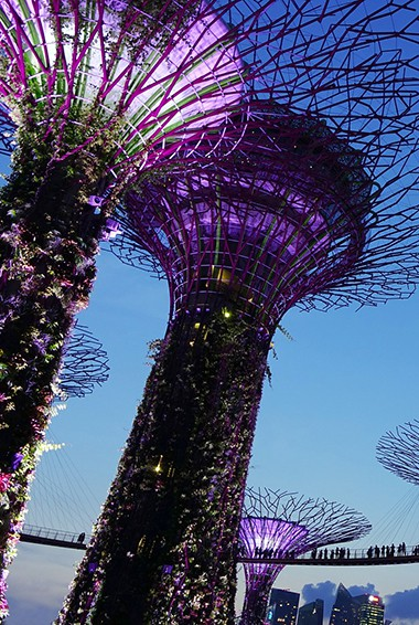 Singapore's tall supertrees lit up at night