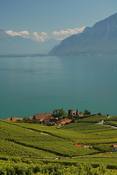 green farmland over Lake Geneva