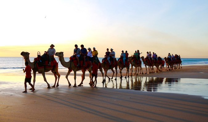 A line of camels walking along the beach in Morocco