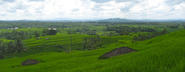 Strolling through famous rice fields in Bali, Indonesia