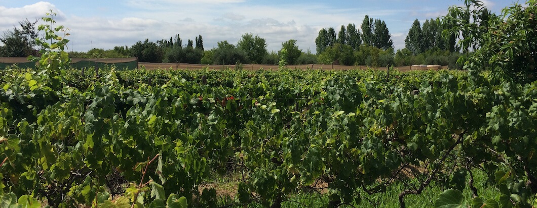 Traveling to Mendoza for wine tasting in Argentina