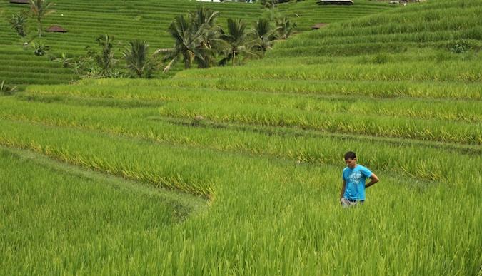 Matt nómada viaja lentamente en el campo de empanada de arroz de Vietnam
