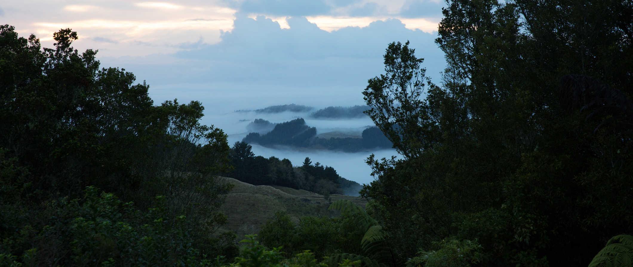 A landscape in Waitomo