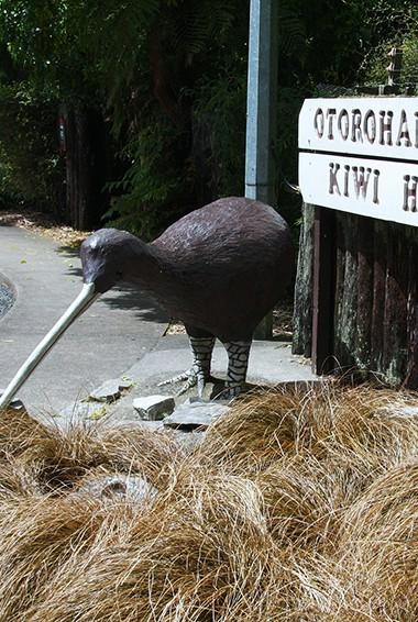 Local bird life in Waitomo, New Zealand