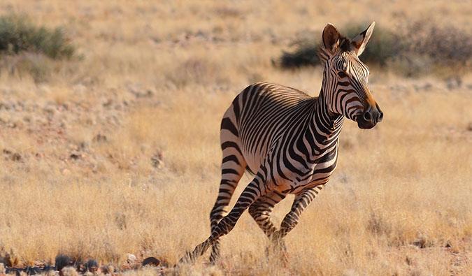 zeba running in Namibia